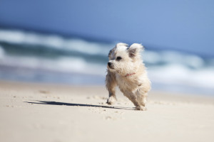 traveling to Destin Florida with Pets or anywhere else.