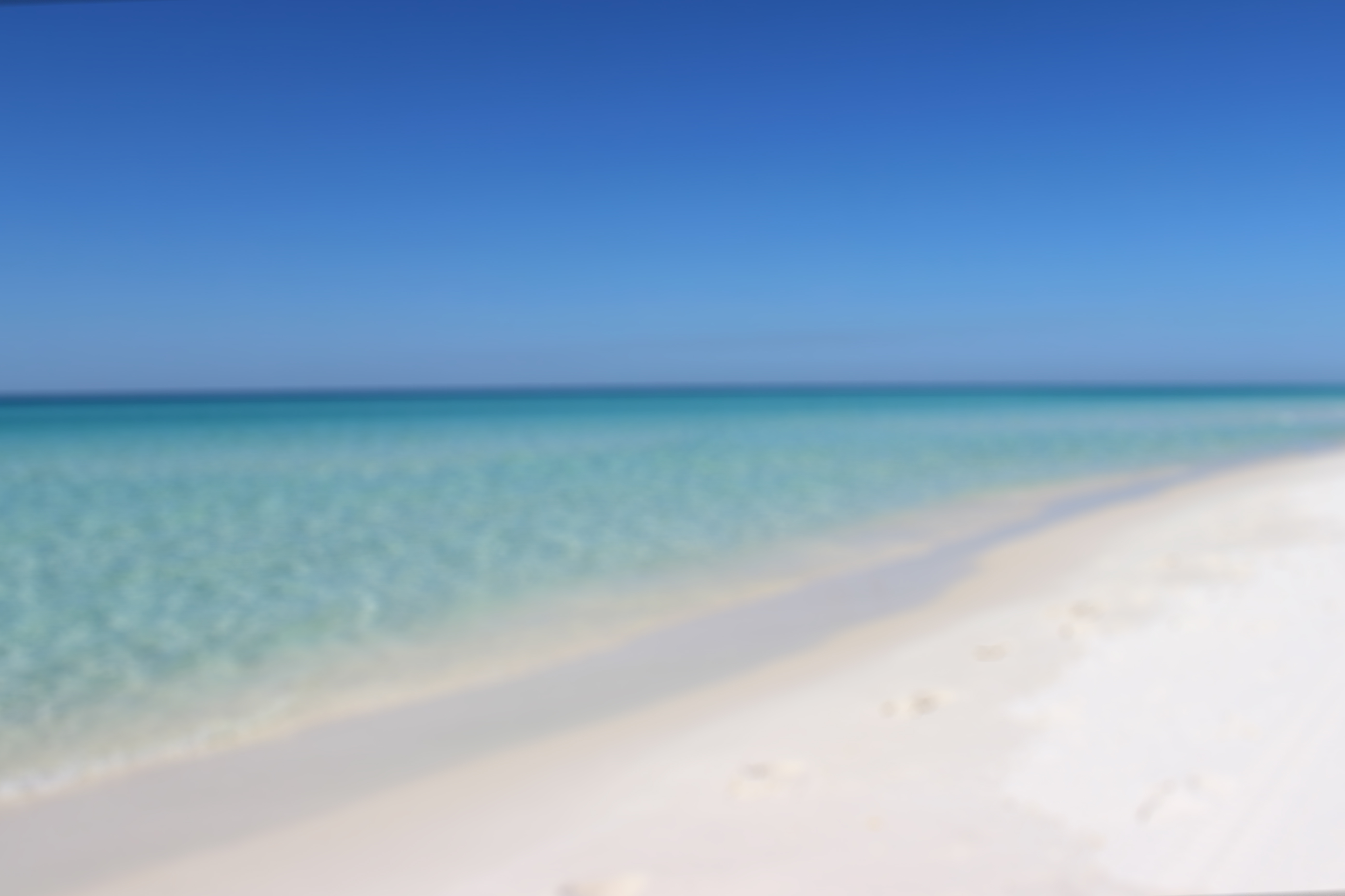 Pet Friendly Florida Vacation Rentals